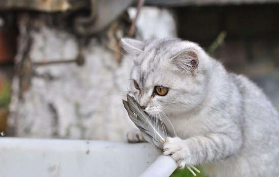 长毛猫夏天在家太热怎么办