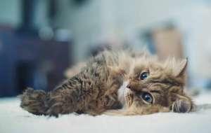 幼猫为什么喜欢咬人手?
