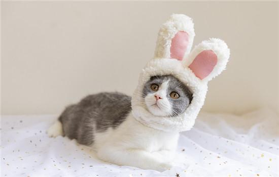 长毛猫品种