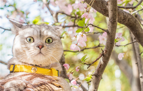 猫会做梦吗会梦到什么