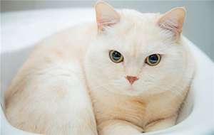 母猫绝育的坏处?