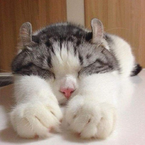 猫咪种类 图3
