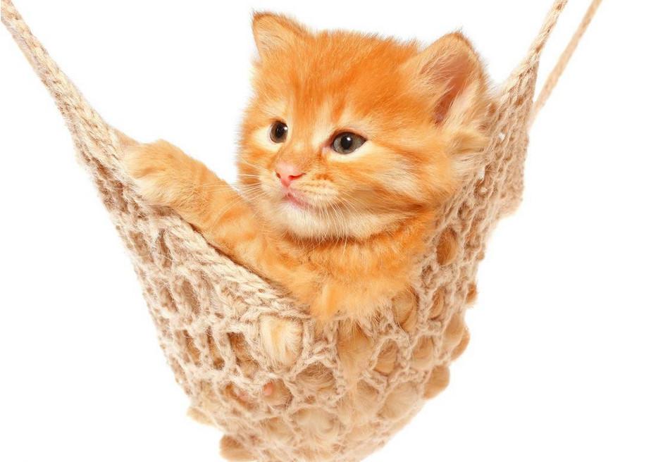猫咪抓人 图2