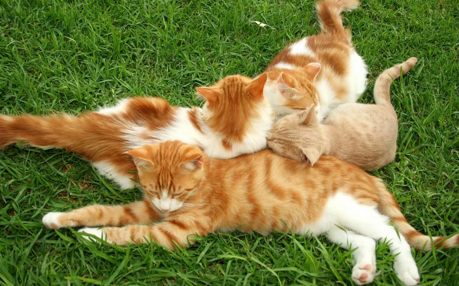 猫咪抓人 图3