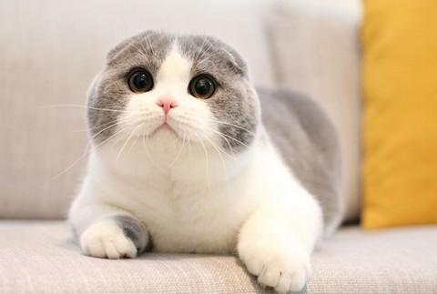 猫咪种类 图2