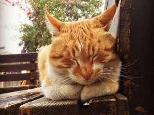 开始变老的猫咪会有哪些表现呢?