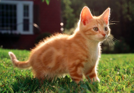 常见的识别病猫方法