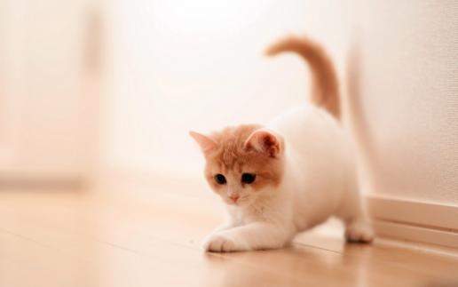 幼猫死亡七大杀手 专家支招小猫饲养要点