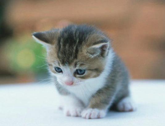现代猫咪压力大?因为主人把它们当狗养
