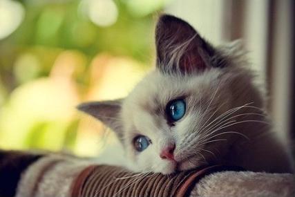 猫咪异常调皮该怎么办才好?