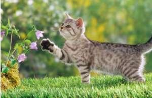 猫咪犯错后该如何惩罚?