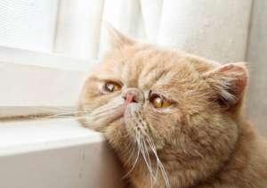 老年猫猫四大疾病防治