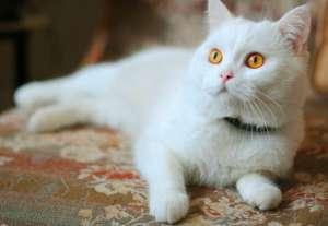 幼猫养护指南
