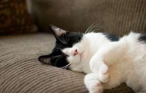 猫咪产后缺钙怎么治疗?