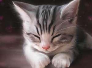 猫咪挑食要怎么办?如何防止猫咪挑食?