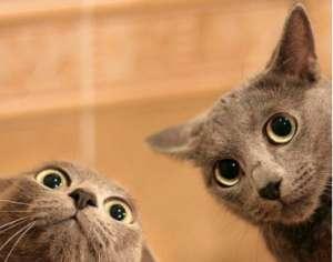 新猫咪进入家庭应该注意什么?