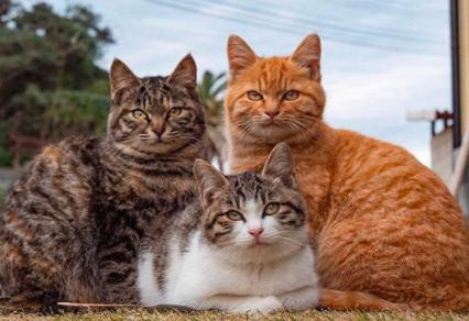 哪些营养要素是猫咪必须的?