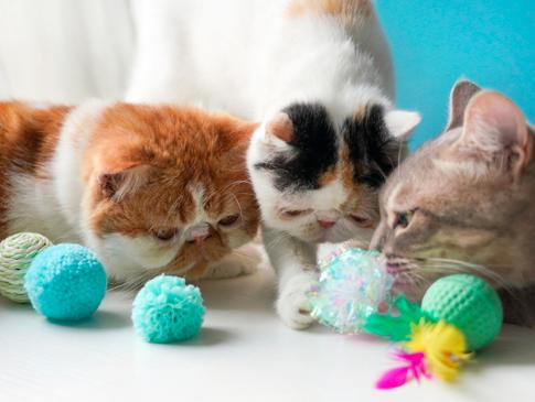 为什么猫咪喜欢毛茸茸的球?