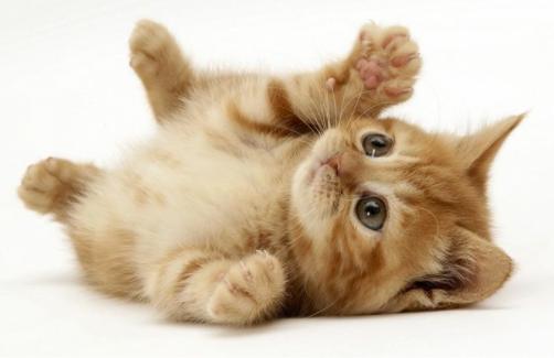 猫咪认得回家的路吗?猫咪能自己回家吗?