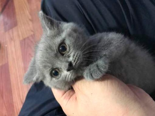 猫咪也需要遛吗?遛猫需要注意些什么?