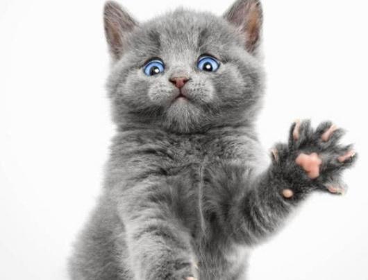 猫咪可以穿鞋子吗?