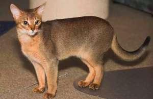 为什么猫咪被抓后脖子就动不了?