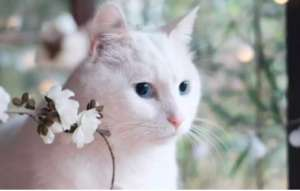 分辨颜色对猫咪捕猎有帮助吗?