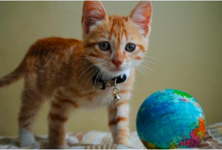 猫咪老是跑出门怎么办?防止猫咪老是外出的措施