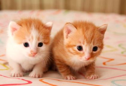 宠物猫胆小怕生怎么办?