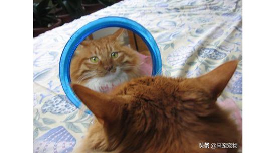 干货|如何让猫意识到自己胖,并成功减肥