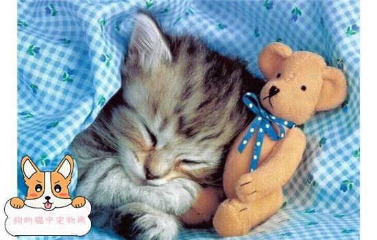 怎么训练猫咪不上床 训练猫咪不上床方法