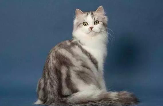 猫咪应该怎么养呢?