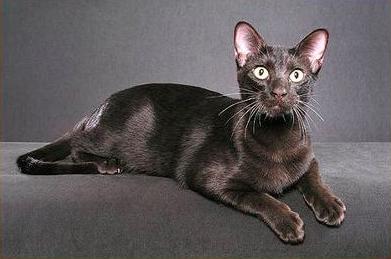 猫咪的胡须有什么作用?猫咪胡须作用介绍