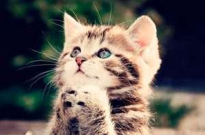好听的猫咪名字有哪些?