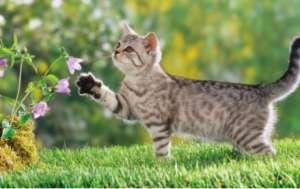 哪些营养要素是猫咪必须的呢?