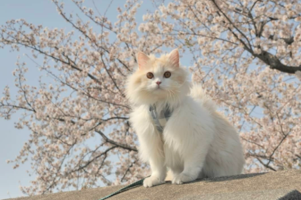 怎么让猫咪与其它小动物和谐相处?