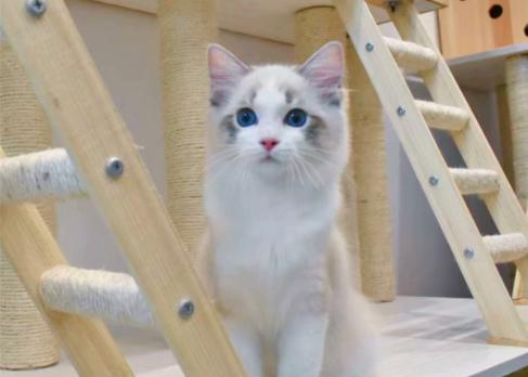 猫发出呜呜的声音是什么意思?