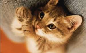 家中养猫注意五个危险地区
