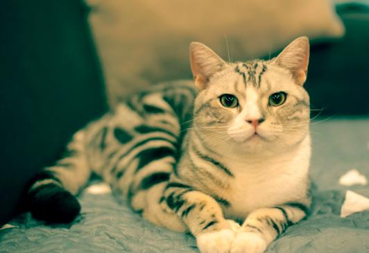 导致猫咪呕吐的3种原因