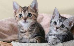 养猫的好处有哪些?可能好多你没发觉