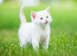 寒冬来袭 猫猫如何预防感冒?