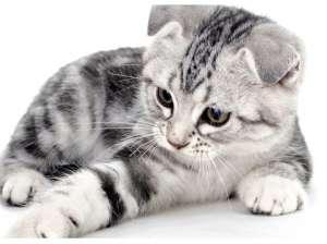 猫咪异常调皮该怎么办?