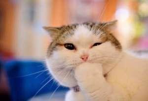 养猫必防皮肤病 小猫身上有异味怎么办