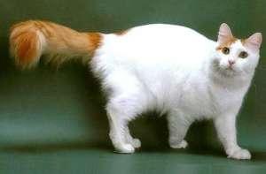 猫猫腿伤不能走路怎么办?