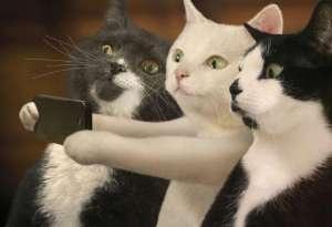 猫咪爱玩是天性 教你通过游戏来训练猫咪