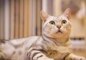 要养猫了吗?告诉你新手养猫必知的12个小常识