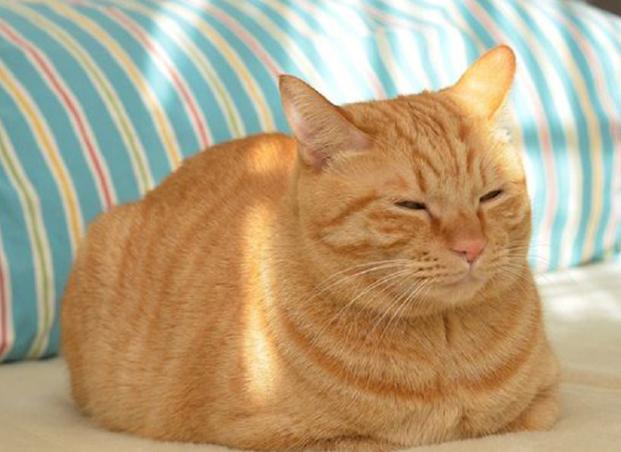 寻找猫咪方法,猫咪走失原因?