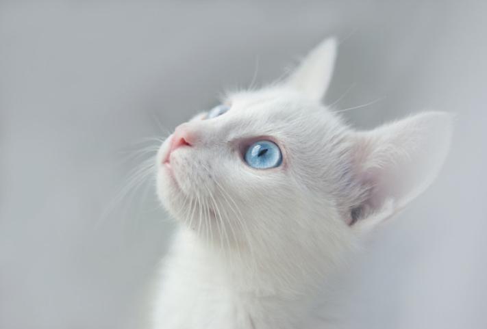 春季养猫的注意事项