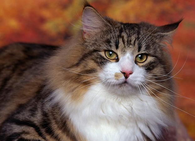 养宠物猫怎么教它不要破坏家具?