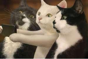 如何挑选猫咪?